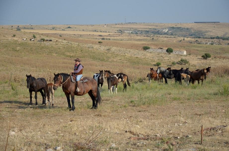 In sella, per la transumanza dei cavalli bradi sul Gargano