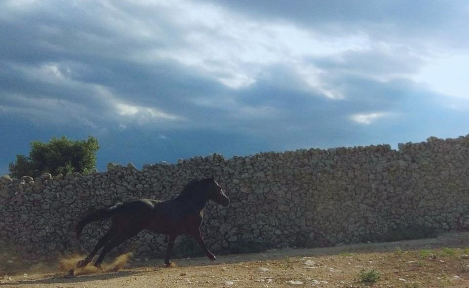 I murgesi di Masseria Grottillo e l'esperienza di contrada aprono i viaggi del pastore sul tratturo gioiese