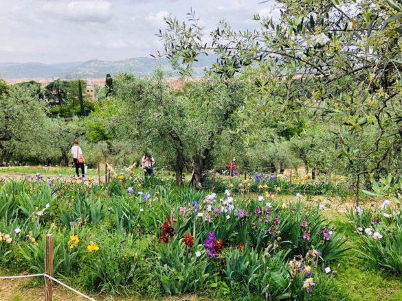 """Firenze rifiorisce dalla quarantena col Giardino degli Iris. """"È il simbolo della nostra città"""""""