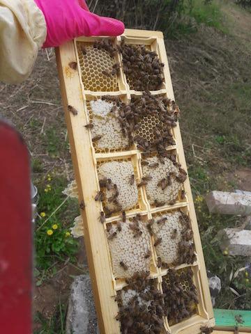"""""""Bee Home"""", il primo apiario del benessere in Puglia. La storia di Daniela Siepi"""