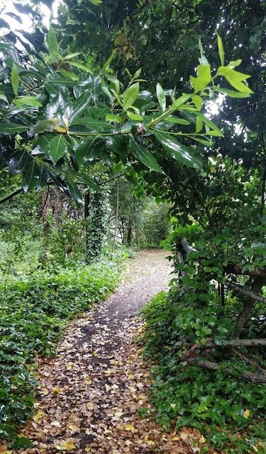 Cava, bacino idrico, orto giardino, immondezzaio. Ora una Foresta Urbana a Lecce